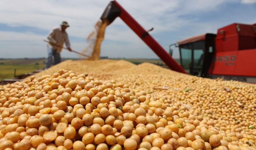 Produção de grãos deve superar 268 milhões de toneladas na safra 2020/21