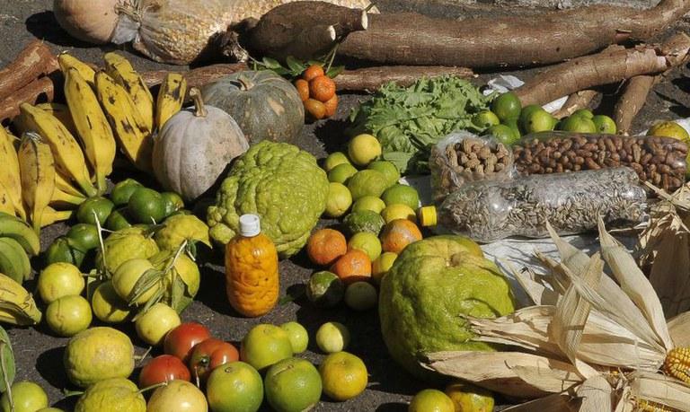 Cerca de R$ 80 milhões já foram aplicados na agricultura familiar neste ano