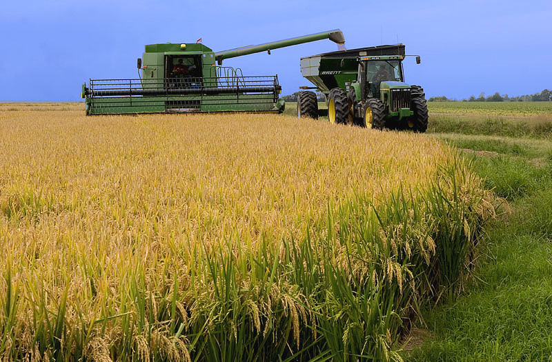 Balanço da safra de arroz é destaque na Expointer