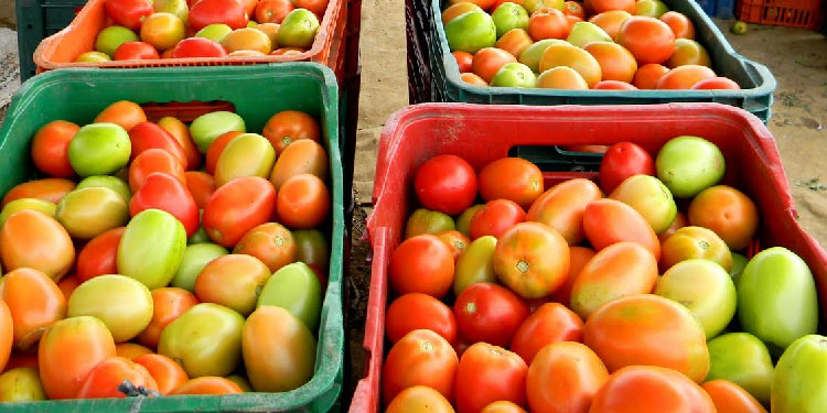 Alta temperatura impacta nos preços de frutas e hortaliças comercializadas no atacado